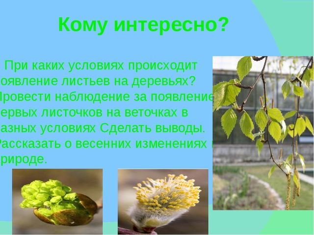 Кому интересно? При каких условиях происходит появление листьев на деревьях?...