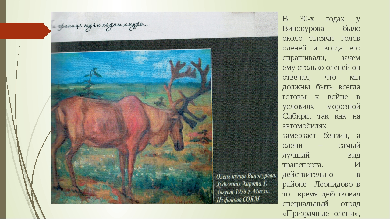 В 30-х годах у Винокурова было около тысячи голов оленей и когда его спрашива...