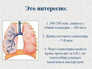1. 300-350 млн. альвеол с общей площадью – 100 кв.м 2. Длина легочного капилл