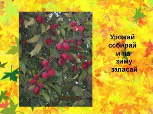 Урожай собирай и на зиму запасай