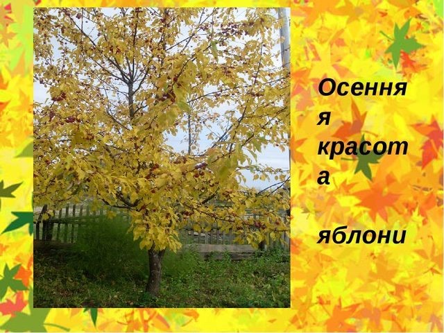 Осенняя красота яблони