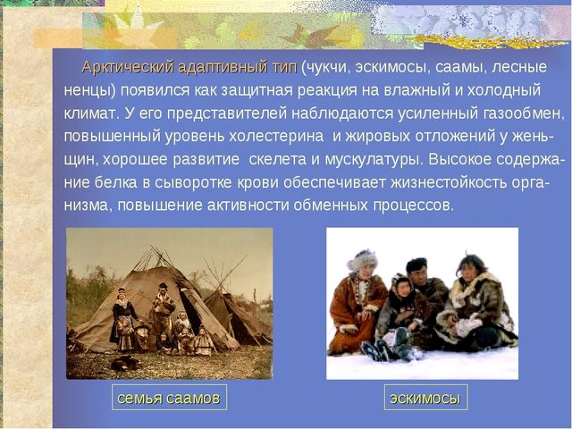 Арктический адаптивный тип (чукчи, эскимосы, саамы, лесные ненцы) появился к...