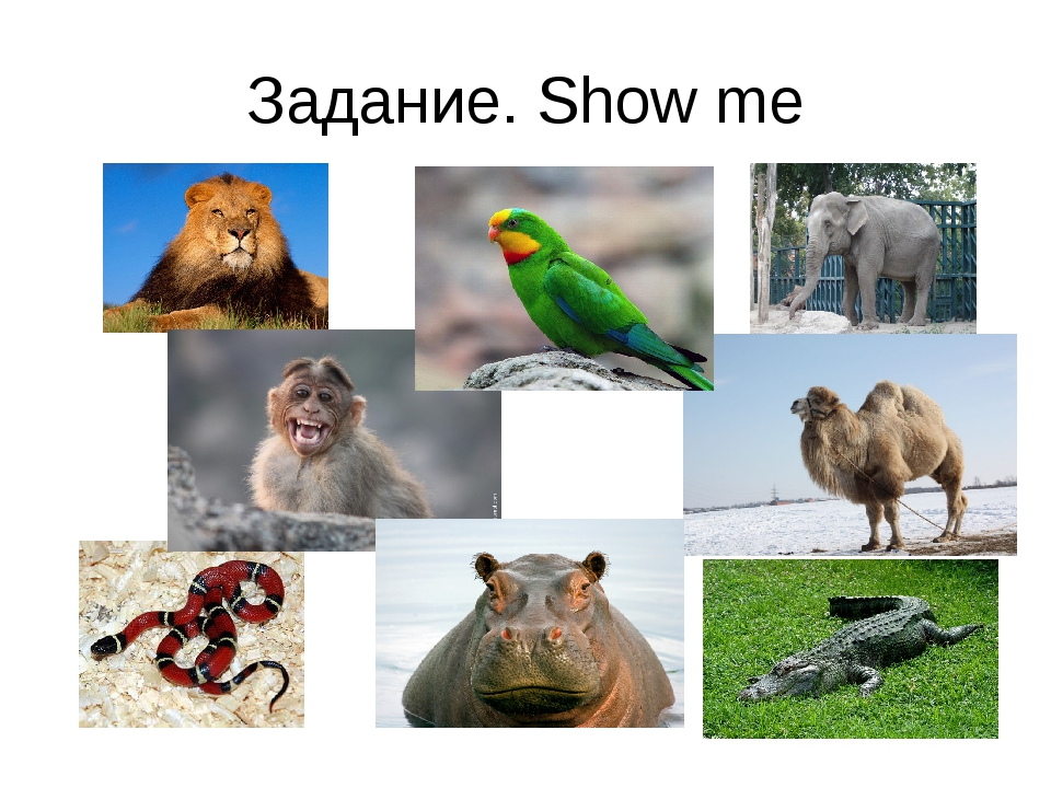 Задание. Show me