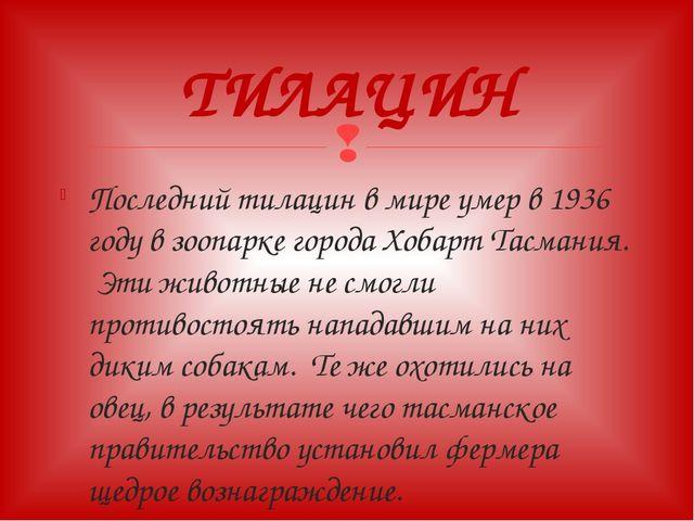 Последний тилацин в мире умер в 1936 году в зоопарке города Хобарт Тасмания....