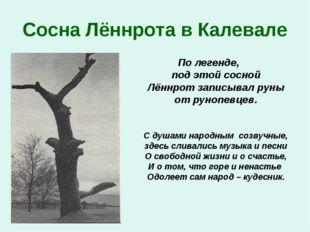 Сосна Лённрота в Калевале По легенде, под этой сосной Лённрот записывал руны