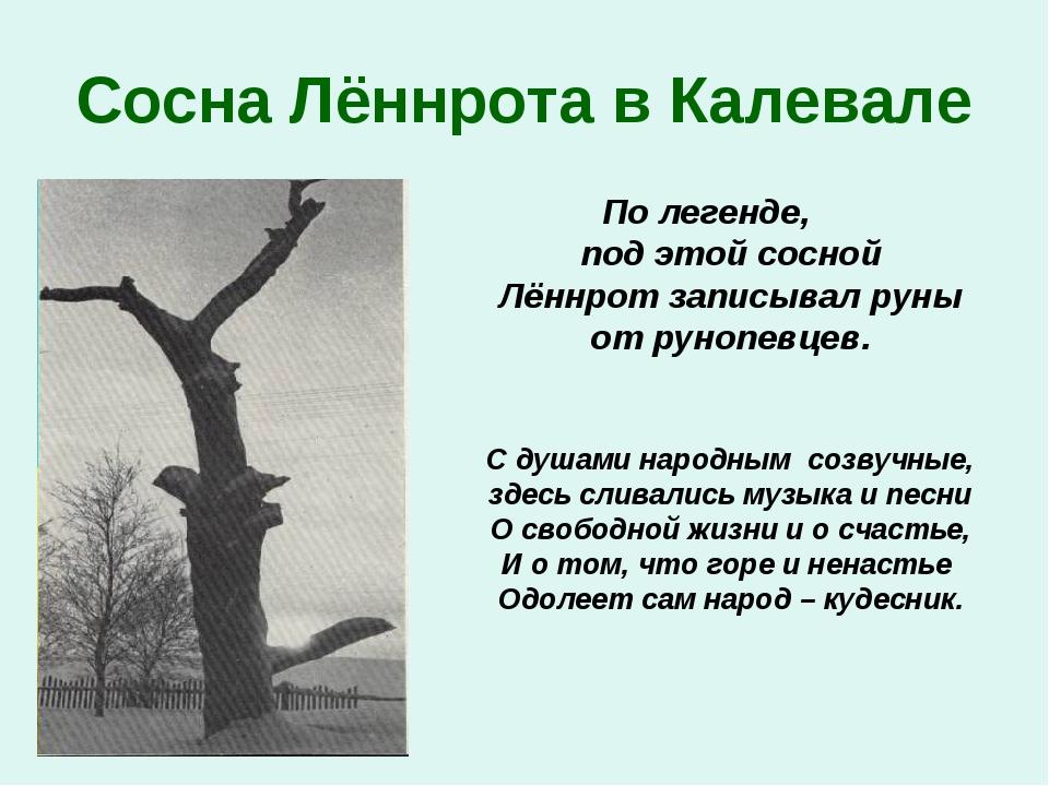 Сосна Лённрота в Калевале По легенде, под этой сосной Лённрот записывал руны...