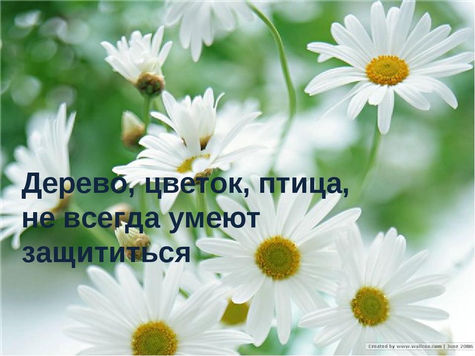Дерево, цветок, птица, не всегда умеют защититься