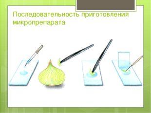 Последовательность приготовления микропрепарата