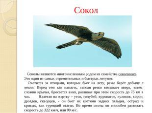 Сокол Соколы являются многочисленным родом из семействасоколиных. Это один и