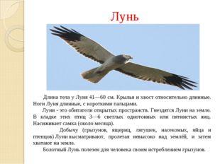 Лунь Длина тела уЛуня41—60 см. Крылья и хвост относительно длинные. НогиЛу