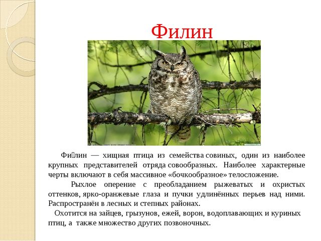 Филин Фи́лин— хищная птица из семействасовиных, один из наиболее крупных п...