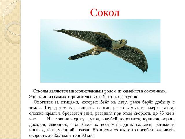 Сокол Соколы являются многочисленным родом из семействасоколиных. Это один и...