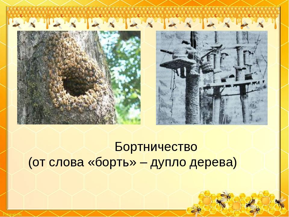 Бортничество (от слова «борть» – дупло дерева)