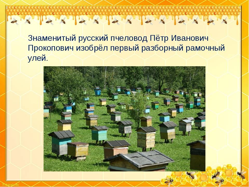 Знаменитый русский пчеловод Пётр Иванович Прокопович изобрёл первый разборный...