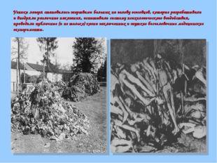 Узники лагеря становились жертвами больных на голову эсэсовцев, которые разра