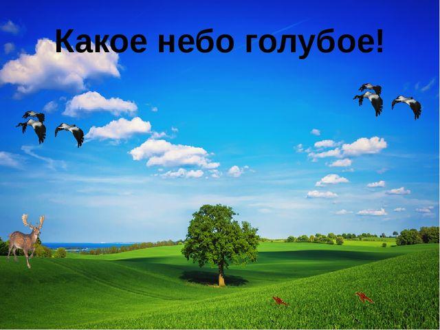Какое небо голубое!