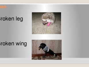 Broken Broken leg Broken wing