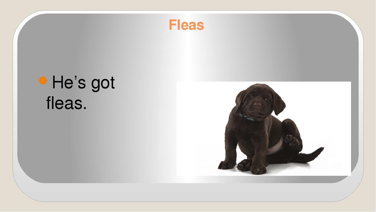 Fleas He's got fleas.