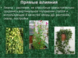 Прямые влияния Лианы – растения, не способные самостоятельно сохранять вертик