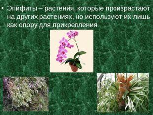 Эпифиты – растения, которые произрастают на других растениях, но используют и
