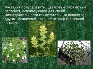 Растения-полупаразиты, цветковые паразитные растения, использующие для своей