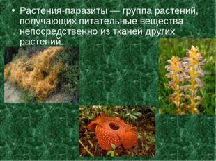 Растения-паразиты — группа растений, получающих питательные вещества непосред