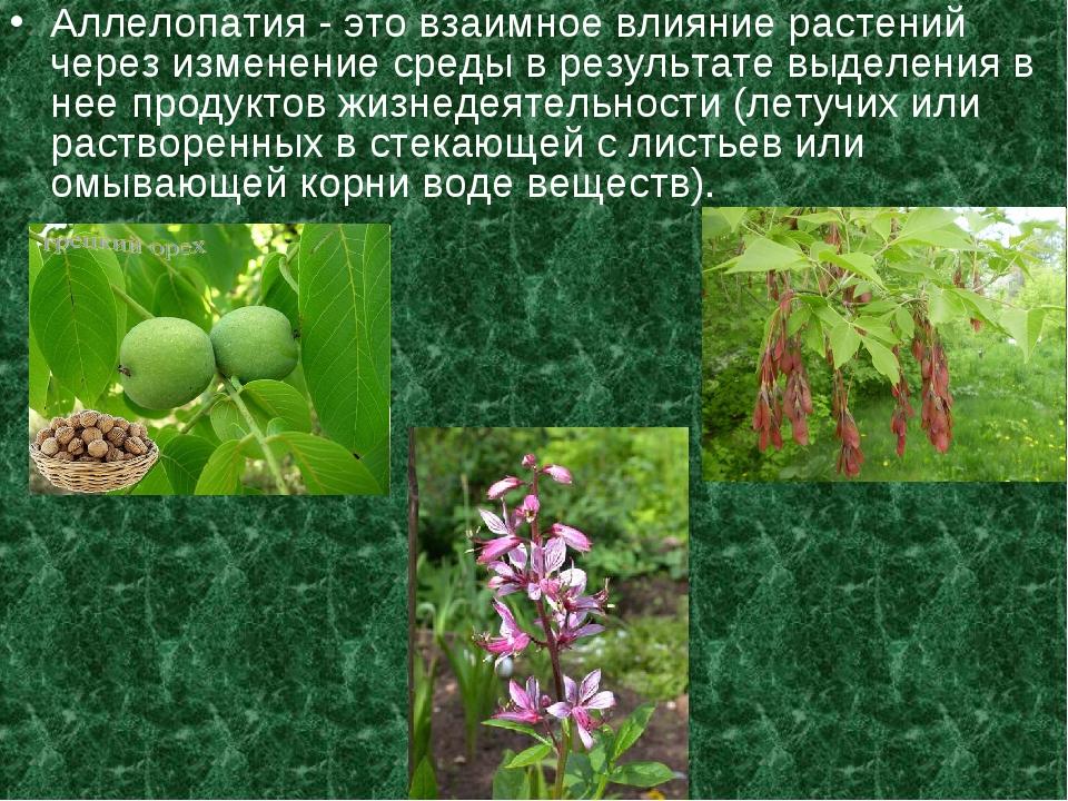Аллелопатия - это взаимное влияние растений через изменение среды в результат...