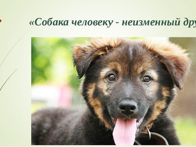 «Собака человеку - неизменный друг»