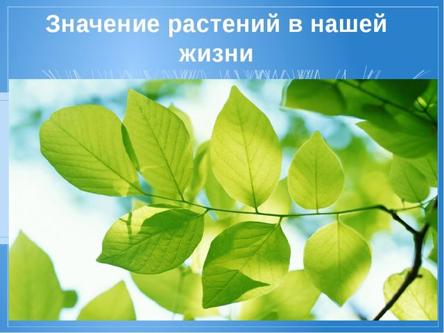 Значение растений в нашей жизни