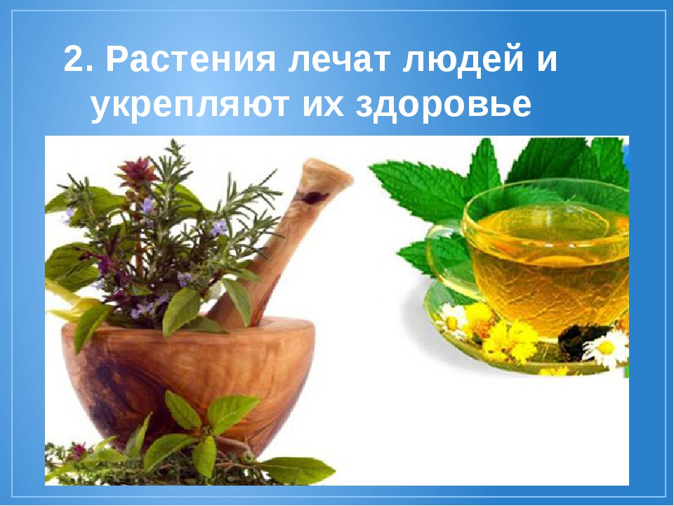 2. Растения лечат людей и укрепляют их здоровье