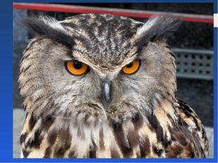 Какая птица с древности считается символом мудрости и познания? ласточка сова