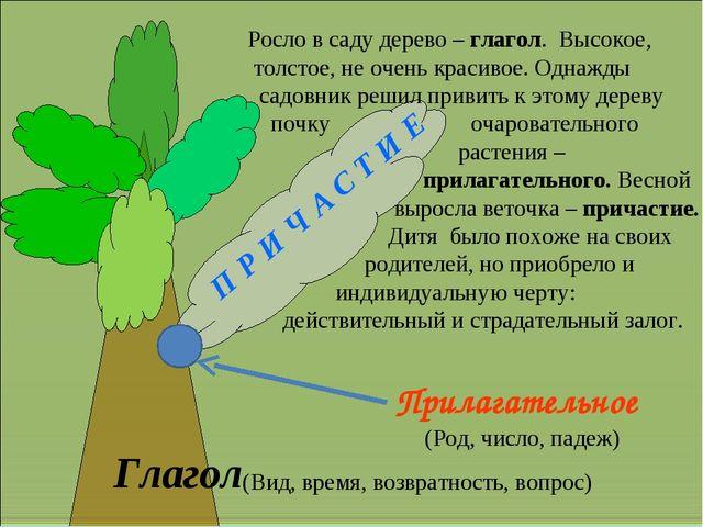 Глагол П Р И Ч А С Т И Е Прилагательное (Вид, время, возвратность, вопрос) (...
