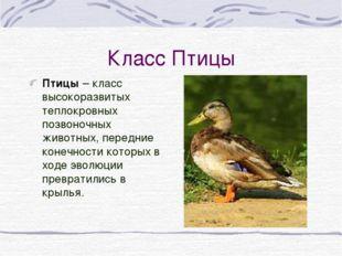 Класс Птицы Птицы – класс высокоразвитых теплокровных позвоночных животных, п