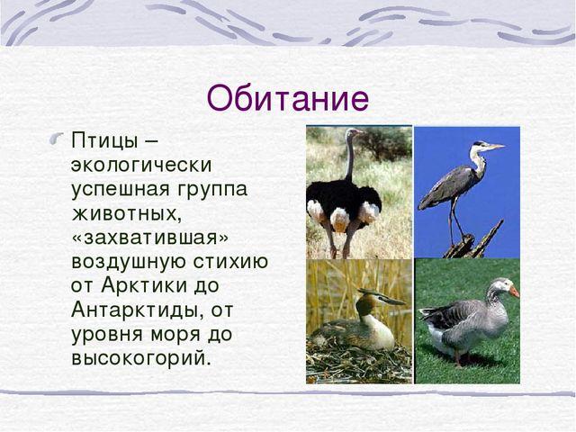 Обитание Птицы – экологически успешная группа животных, «захватившая» воздушн...