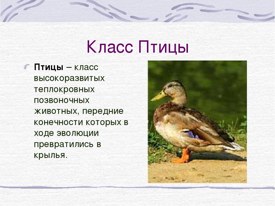Класс Птицы Птицы – класс высокоразвитых теплокровных позвоночных животных, п...