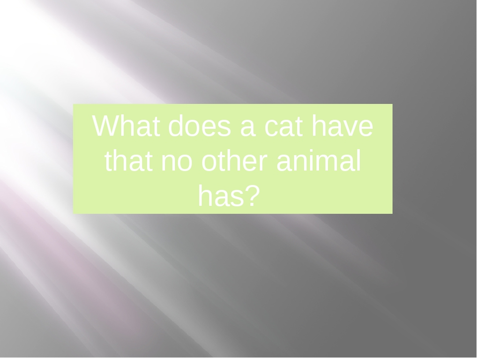 What does a cat have that no other animal has?
