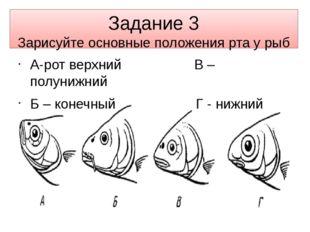 Задание 3 Зарисуйте основные положения рта у рыб А-рот верхний В – полунижний