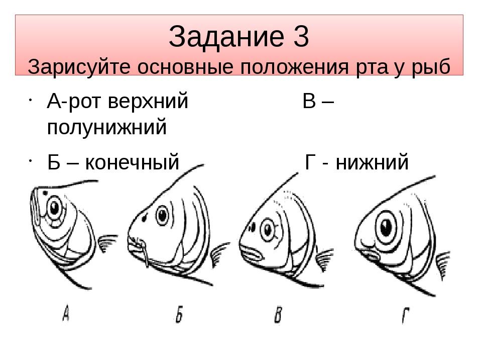 Задание 3 Зарисуйте основные положения рта у рыб А-рот верхний В – полунижний...