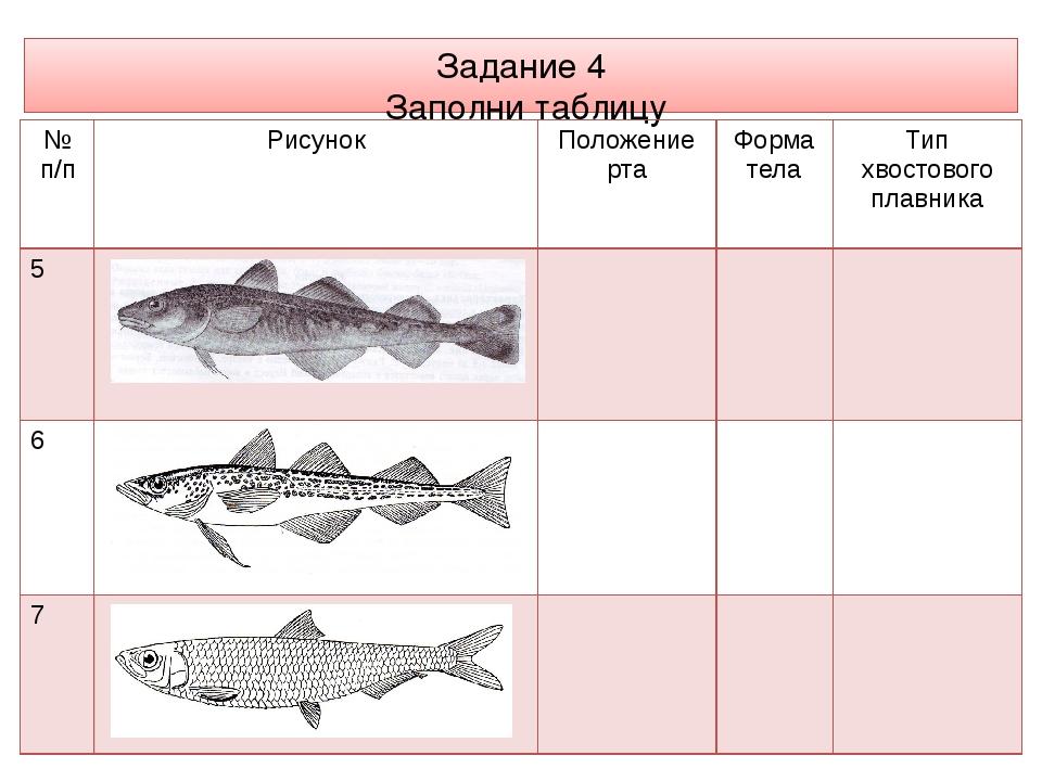Задание 4 Заполни таблицу № п/п Рисунок Положение рта Форма тела Тип хвостово...