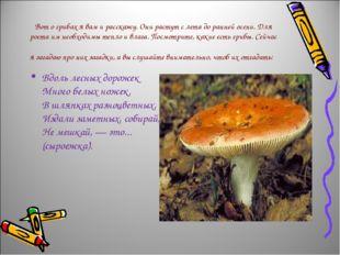 Вот о грибах я вам и расскажу. Они растут с лета до ранней осени. Для роста и