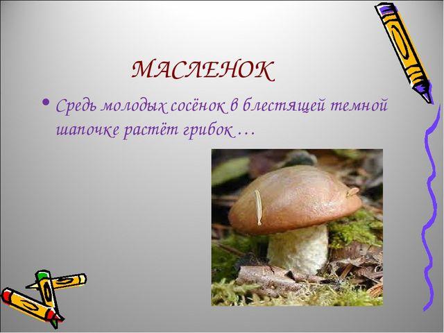 МАСЛЕНОК Средь молодых сосёнок в блестящей темной шапочке растёт грибок …