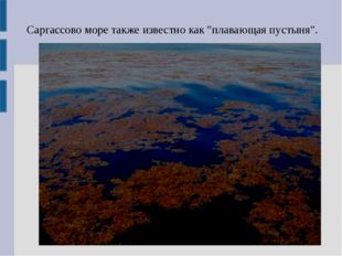 """Саргассово море также известно как """"плавающая пустыня""""."""