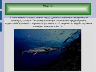 Акулы В море можно встретить синюю акулу, длинноплавниковую океаническую, шел