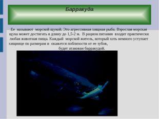 Барракуда Ее называют морской щукой. Это агрессивная хищная рыба. Взрослая мо