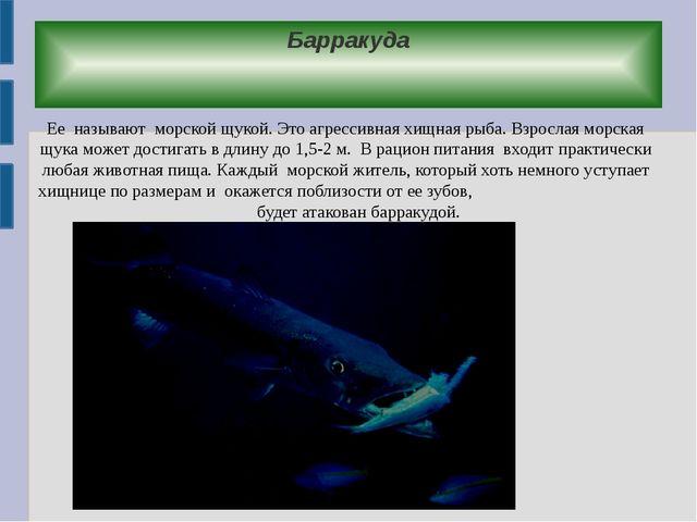 Барракуда Ее называют морской щукой. Это агрессивная хищная рыба. Взрослая мо...