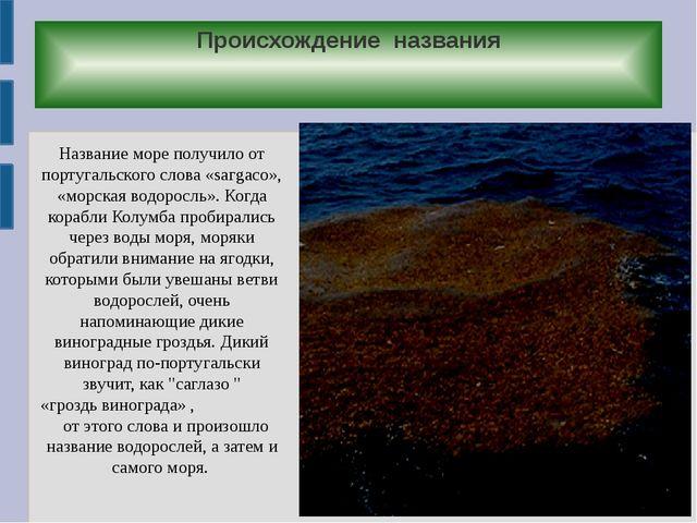 Происхождение названия Название море получило от португальского слова «sагgас...