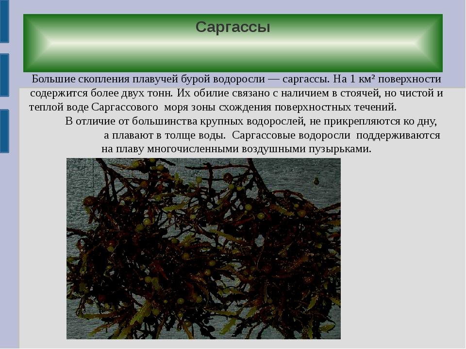 Саргассы Большие скопления плавучей бурой водоросли — саргассы. На 1 км² пове...