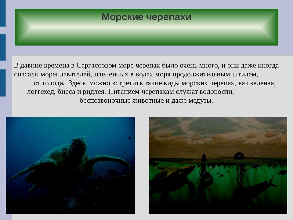 Морские черепахи В давние времена в Саргассовом море черепах было очень много...