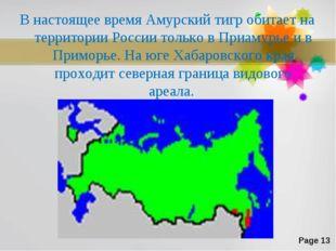 В настоящее время Амурский тигр обитает на территории России только в Приамур