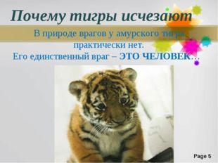 Почему тигры исчезают В природе врагов у амурского тигра практически нет. Его